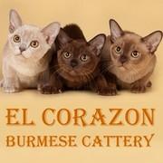 БУРМА питомник El Corazon  group on My World
