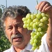 Международная Ассоциация виноградарей и виноделов group on My World