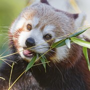 Кинокомпания  иНаЧе ✰ Природа, животные, растения и др group on My World